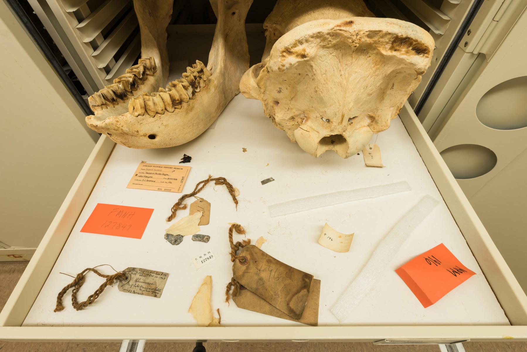 Black Rhinoceros mammal 01 Diceros bicornis - Extinction